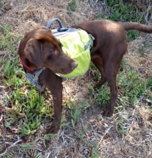 Yvonne Walker Dog Training